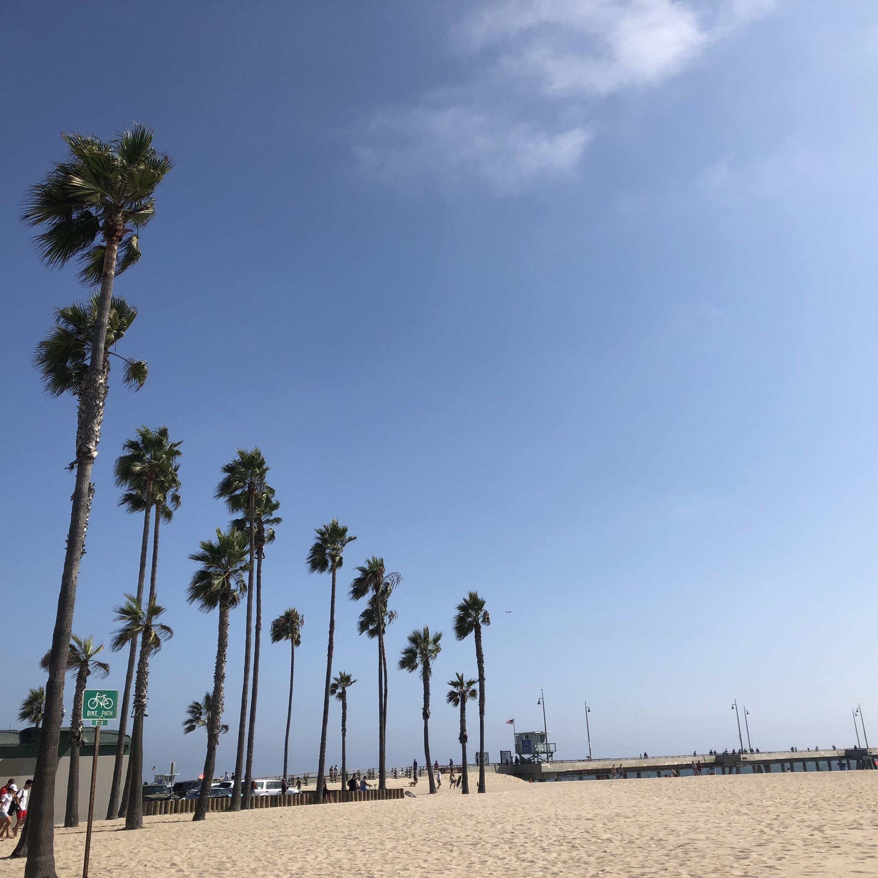 Venice Beach Guide